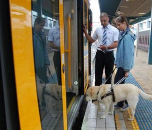 Photo of a woman being assisted by a service dog boarding a transit train car at an accessible station.
