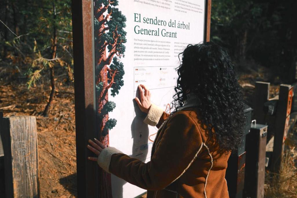 visitor is reading a sign that includes braille translation along the General Grant Tree Trail in Kings Canyon National Park